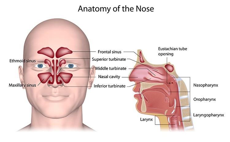Sinusitis Pressure Relief In West Orange , NJ - West Orange  Acupuncture Clinic